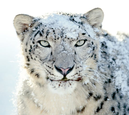 Original Snow Leopard Was Too Blood Thirsty for Mac OS X Box