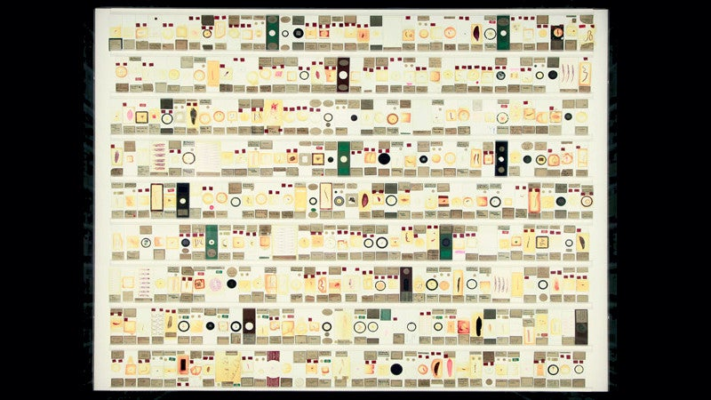 Why Microscope Slides Should Hang in the Louvre