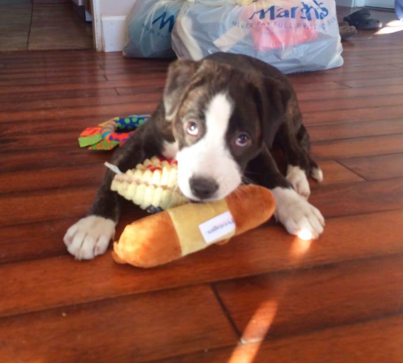 Meet my new puppy