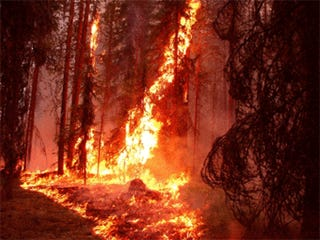 Wildfire Arsonist Wants to Be an Internet Fameball