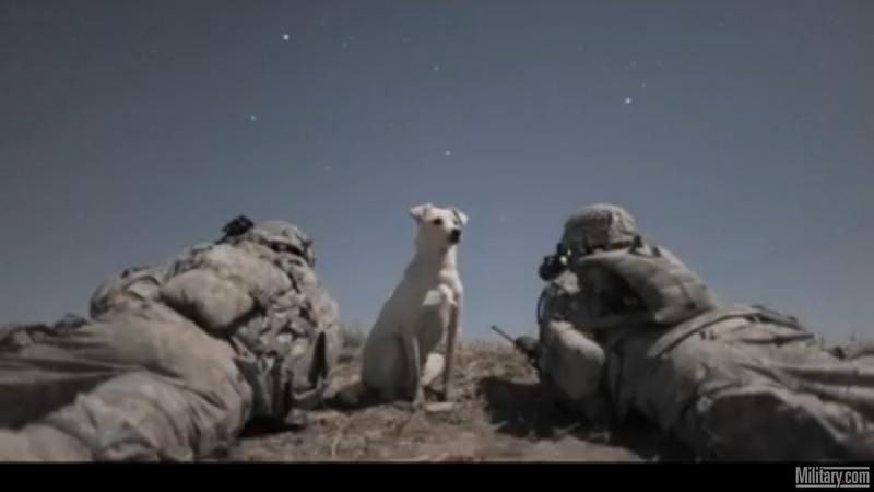 Adopted War Dogs Are the Cutest War Dogs