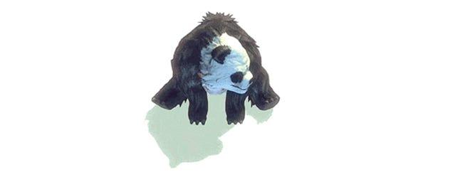 Panda Goes Beserk, Wants To Kill You And Three Friends