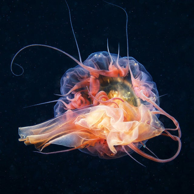 These jellyfish photos are some of the most gorgeous underwater images we've seen in ages