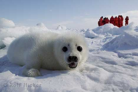 The Internet Is Sucking Up All the World's Energy, Killing Baby Seals
