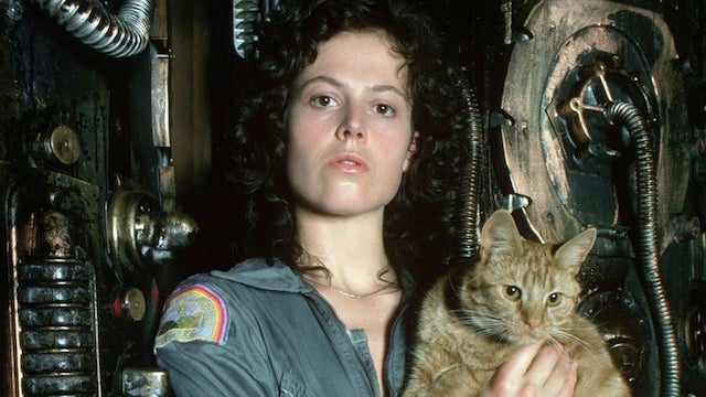 Read Alien, retold from the cat's perspective