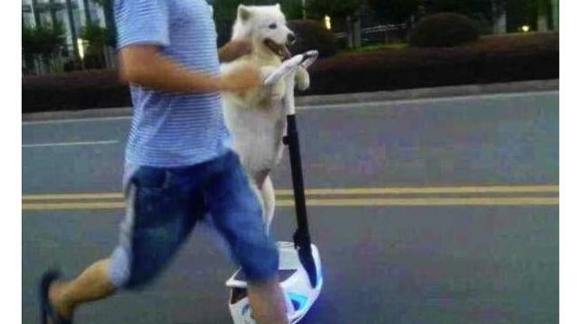 Oh Hey, It's a Dog on a Segway Going Down the Street