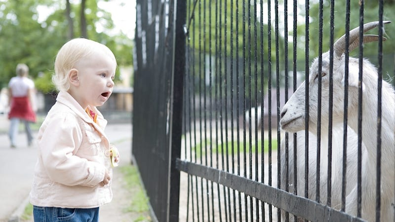 Woman Gives Birth at a Zoo in Syracuse and the Animals Just Stand There, Staring Rudely