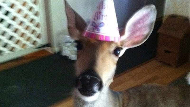 Michigan Family Allowed to Keep Pet Deer Rescued After Mother's Death