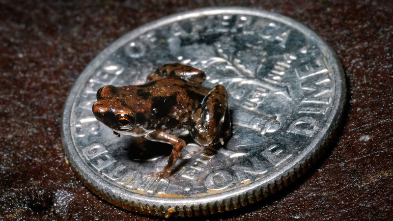 Damn, This Is One Tiny Frog