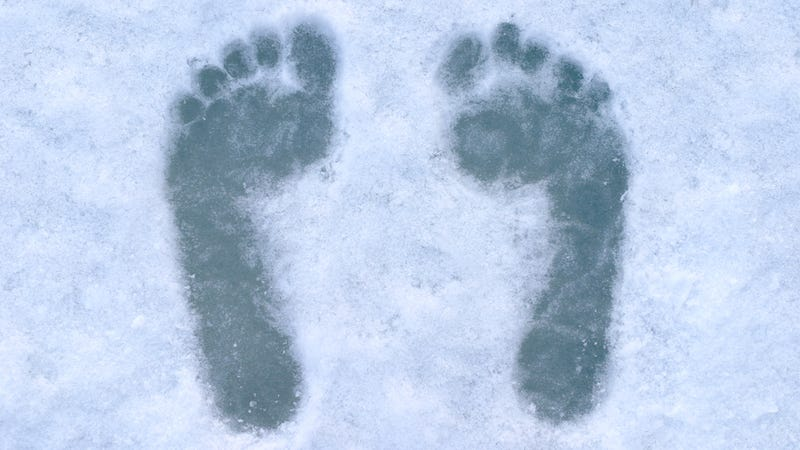 Oxford University Is Hunting For the Yeti