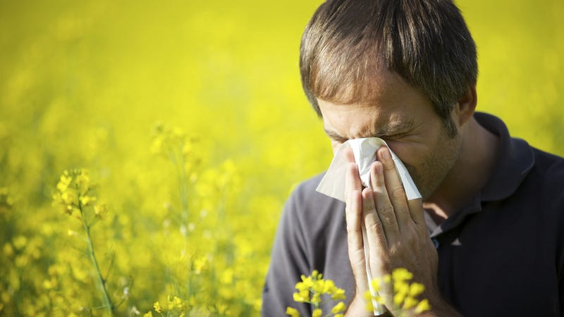 Allergies Could Have Evolved to Protect Us