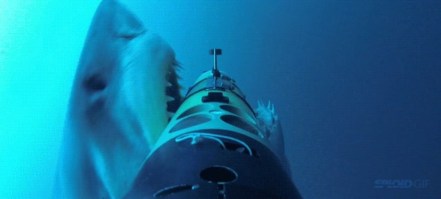 Great white shark attack captured from every possible angle