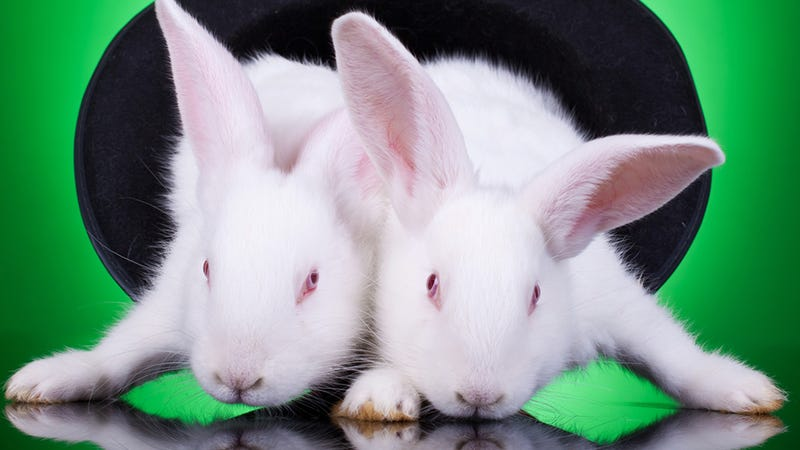 No, Bunnies Don't Rule -- They're Monsters