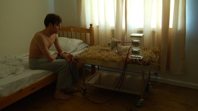 Why the Heck Is This Guy Using a Sheep As a Dialysis Machine?