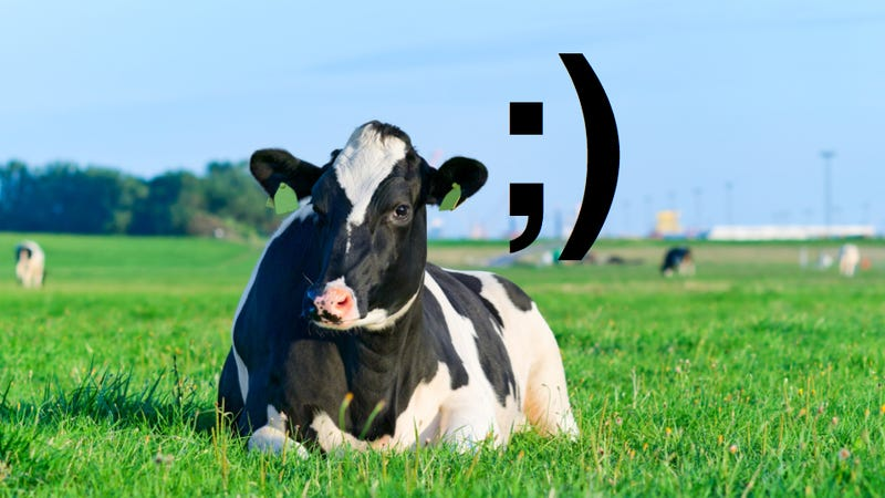 It is now possible to receive text messages from a cow's vagina