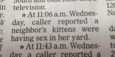 Kitten Sex Prompts Call to Cops