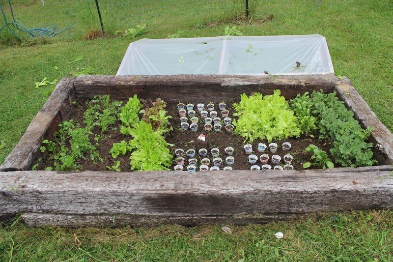 Garden Update #2