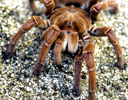 'Operation Spiderman' Brings Down Notorious Spider Smuggler