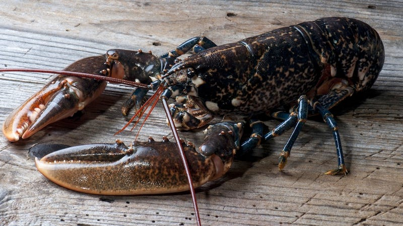 Lobsters Are Now Ruthless, Cannibal Savages