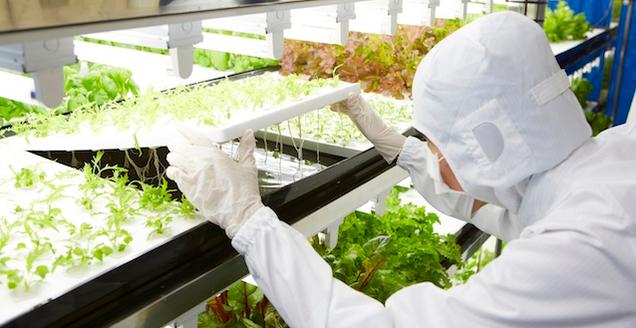 Фермы будущего: выращивание растений без солнца и грунта