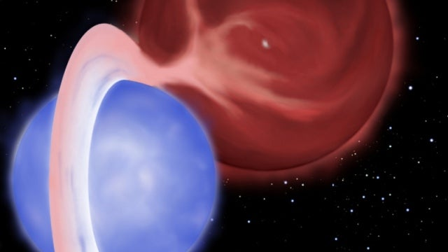 Blue straggler stars are eternally young mysteries