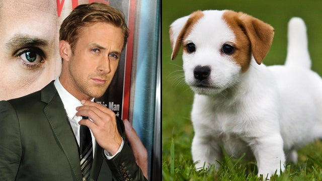 Ryan Gosling Vs. Puppies