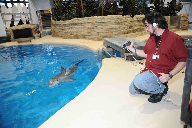 Dolphins can remember their friends better than most humans
