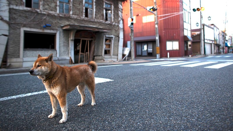 The Lost Animals of Fukushima