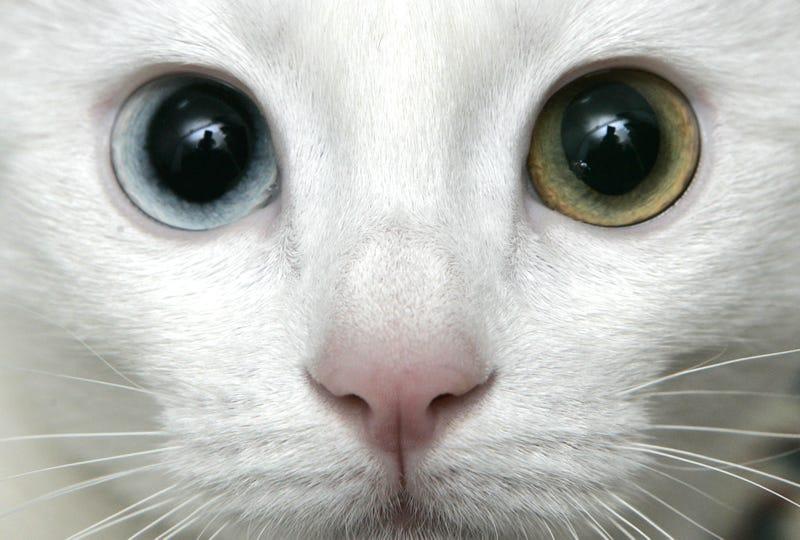 Professor Claims Turkish Quake Made Cats Depressed, Suicidal