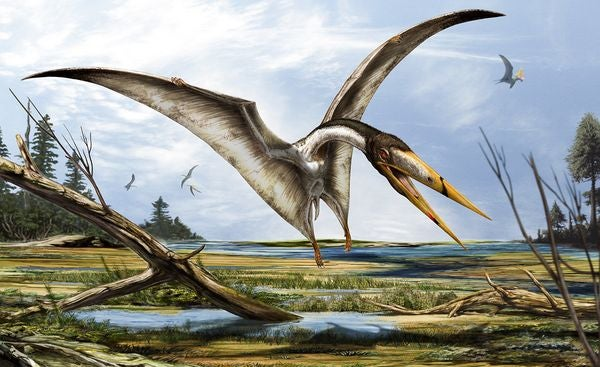 Pterosaurs were pre-historic pole vaulters