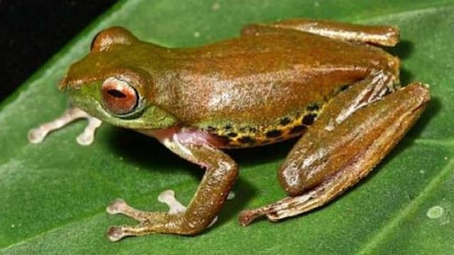 The weird and wonderful animals that make up Borneo's jungle ecosystem