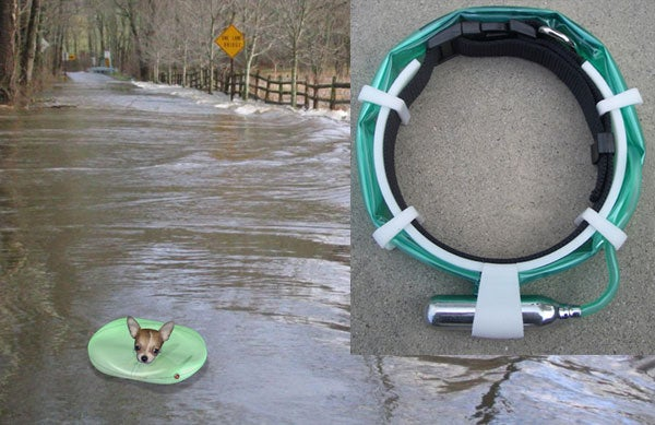 Inflatable Dog Collar Keeps Rover Floating Without Swim Lessons