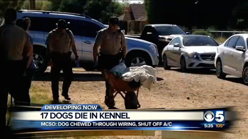 17 Dead Dogs Found in Kennel After Owner Claimed They All Ran Away