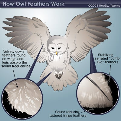 How owls developed stealth technology