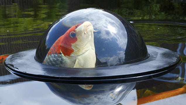 A Floating Observation Dome Gives Fish a Glimpse of the Outside World