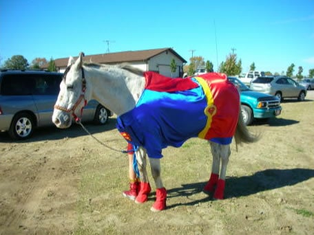 Horsey Potter and the horrors of equine cosplay