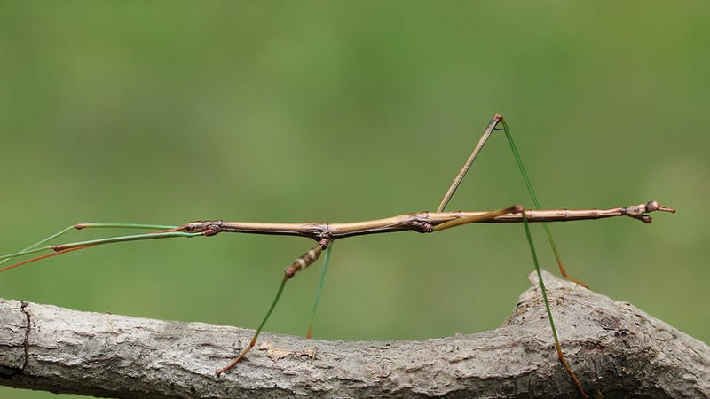 Like Your Ex-BF, Plenty of Insects Are 'Accidentally' Having Gay Sex