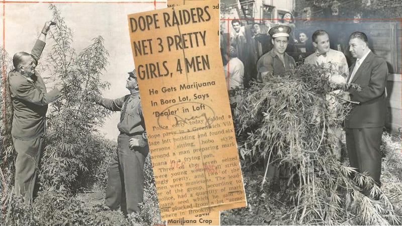 When Brooklyn Had Pot Plants 'as Tall as Christmas Trees'