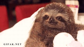 Smooth Operator Sloth Puts the Slow Moves on His Human Love Interest