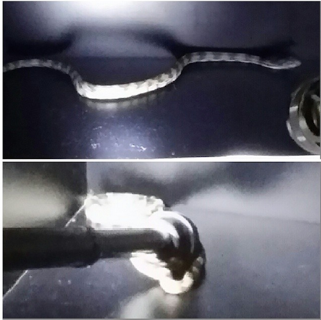 There Was A Snake In The Blazers' Locker Room Before Tonight's Game