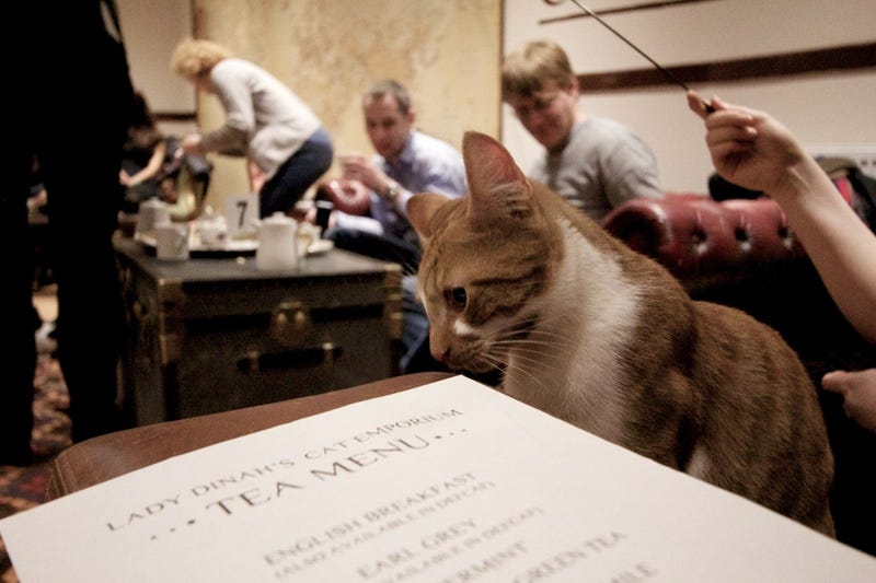 Lady Dinah's Cat Cafe opened in London