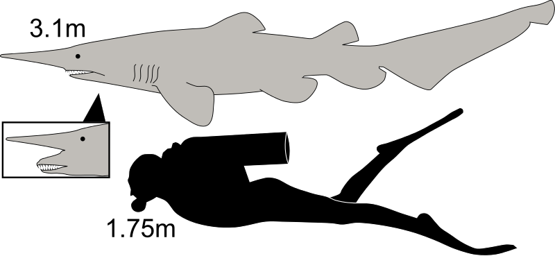 "Meet the Goblin Shark, or as I call it ""Reason 436 to fear the ocean"""