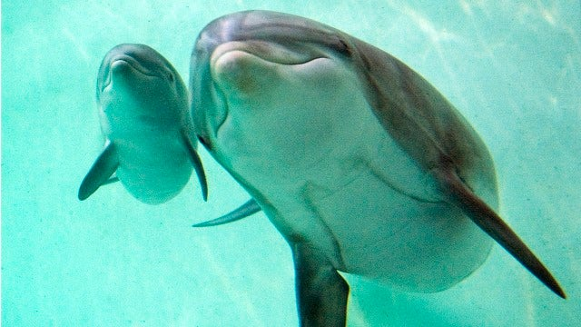 Loud Techno Blamed For Dolphins' Demise