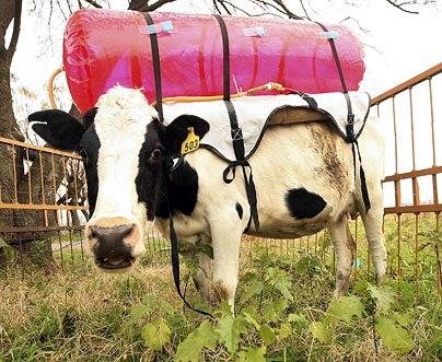 Fart Tanks Fight Methane, Give Al Gore Weird Ideas