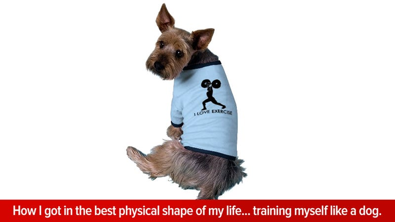 7 Ways To Use Dog Training Methods To Get Yourself Fit