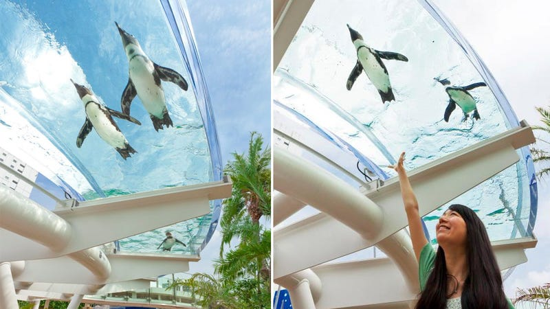 This Aquarium Is the Only Place On Earth Where Penguins Can Fly