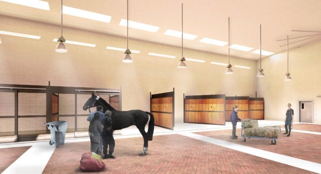 Yes, There Is an Airport Being Designed Just For Animals
