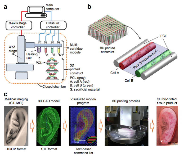 3D Bioprinting Just Took A Major Step Forward