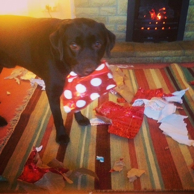 Dogs And Cats Love Wrapping Paper So Damn Much