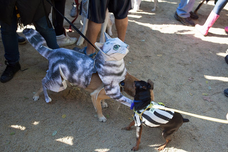 Make It a Cross-Species Halloween